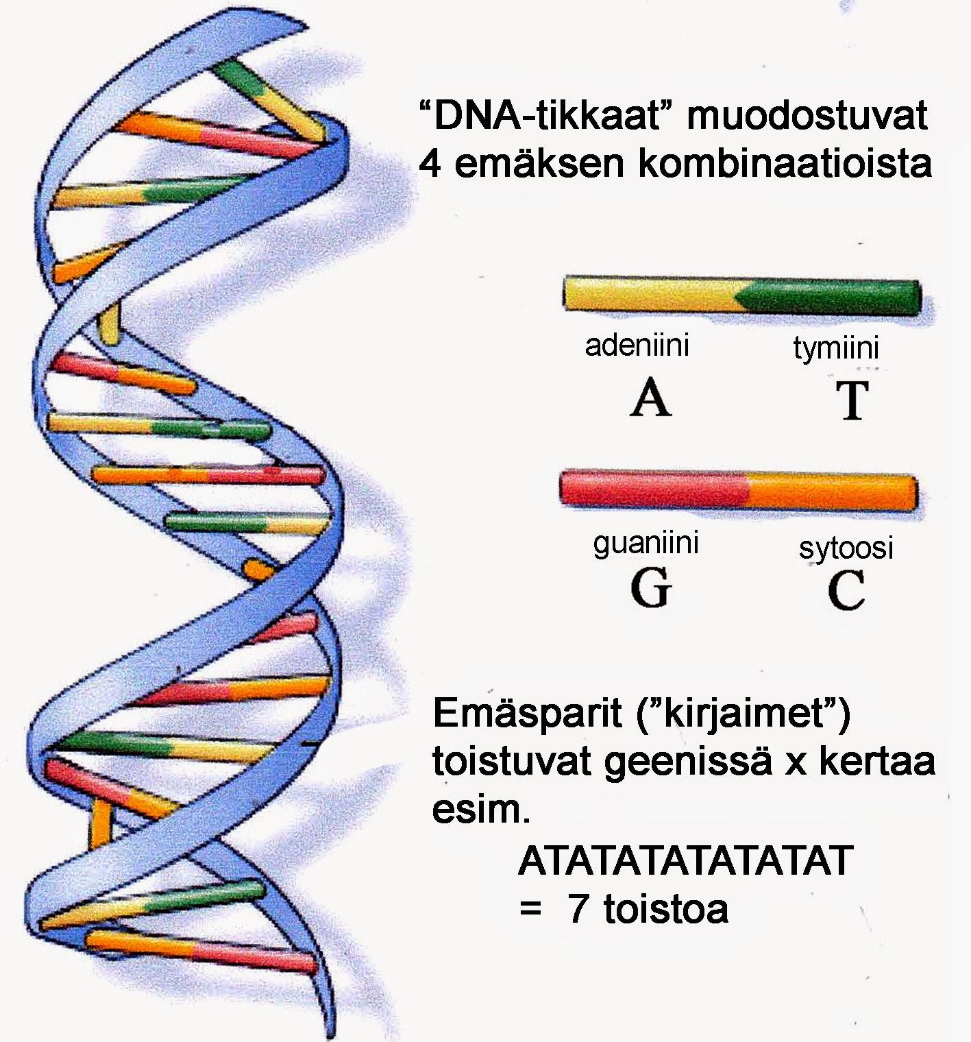 Proteiini rakenne