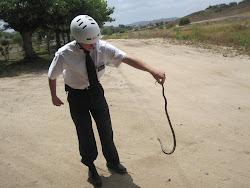 Sharp N' Snake