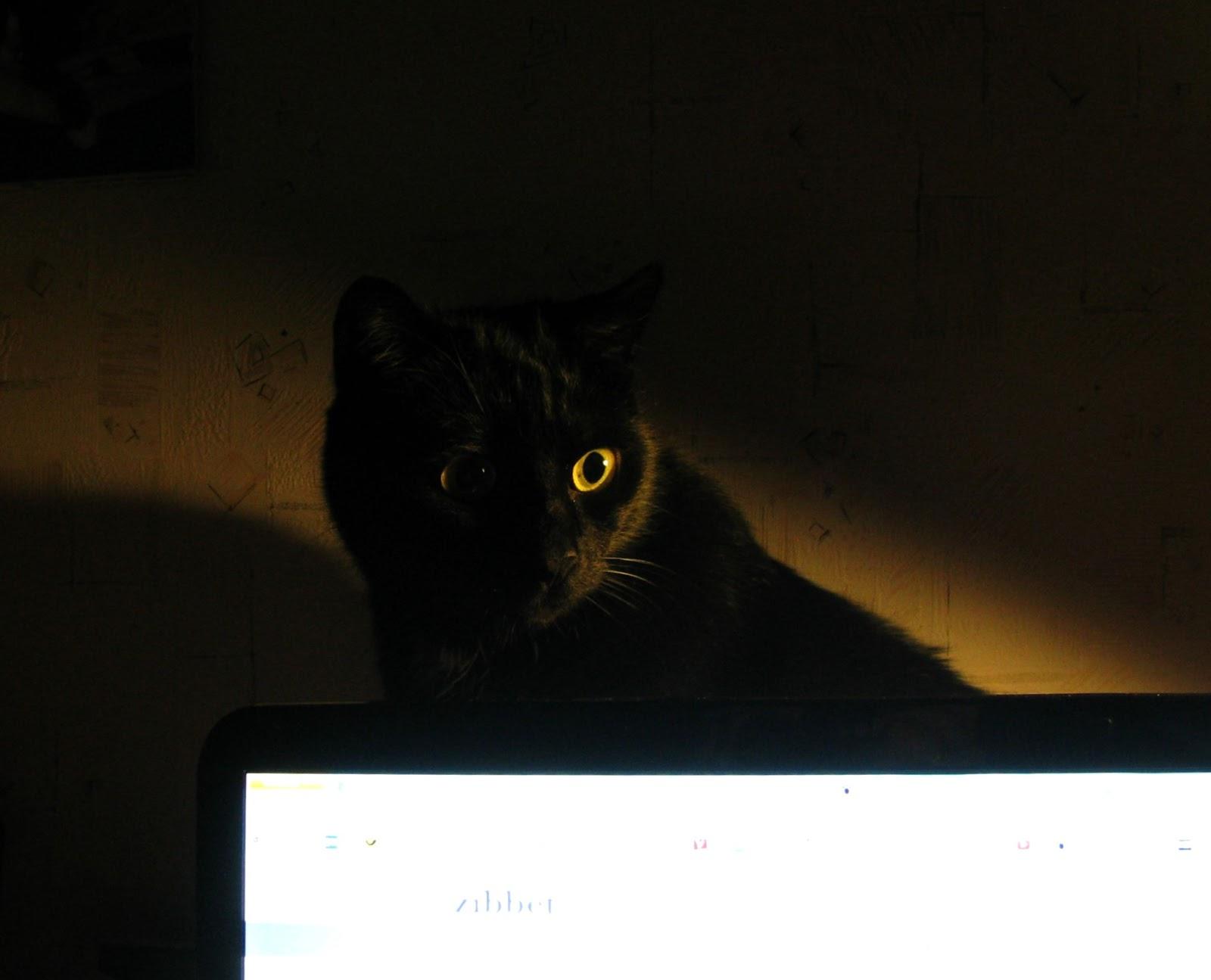 Cat\'s Draht: März 2013