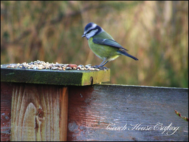 Blue tit, garden bird