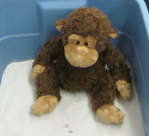 Bono el mono