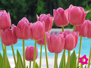 Dia de la Primavera, parte 4