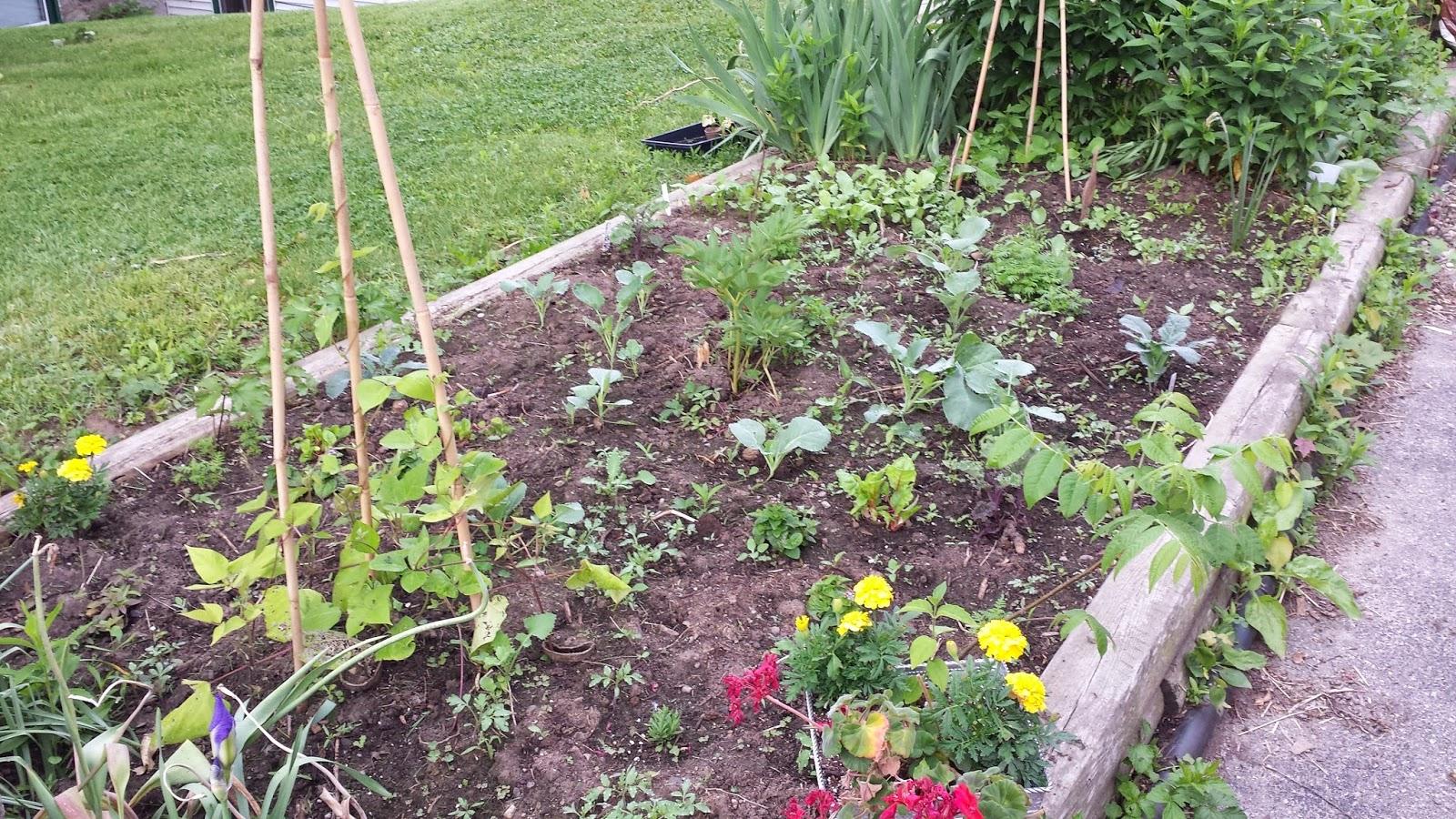 garden June 10 2014