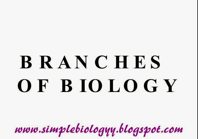 Introduction To Biology And Its Branches Simplebiology