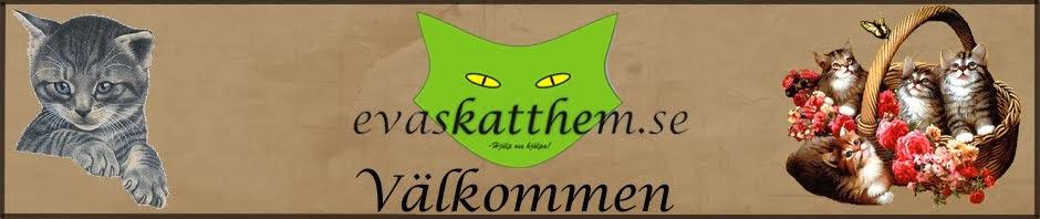 Evas Katthem