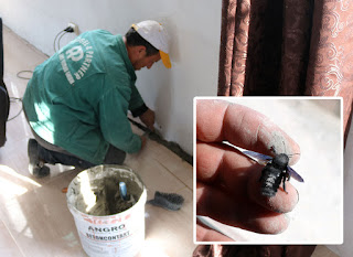 Bekir tiling, and the black insect he put out