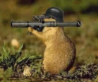 laugh out loud: Little Soldier !