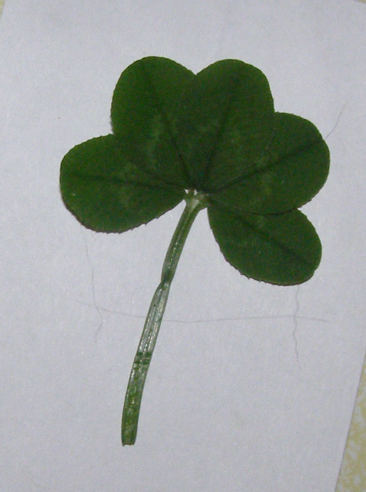 The Wiccan Life Fiveleafed Clover
