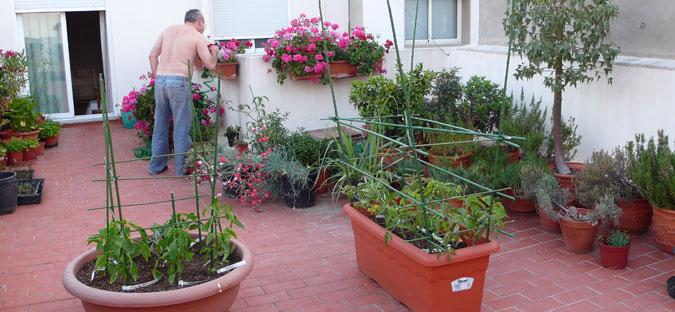 fotos de jardins urbanos : fotos de jardins urbanos:Huertos Urbanos Bahía de Cádiz: ¿Y por qué no? : huertos en
