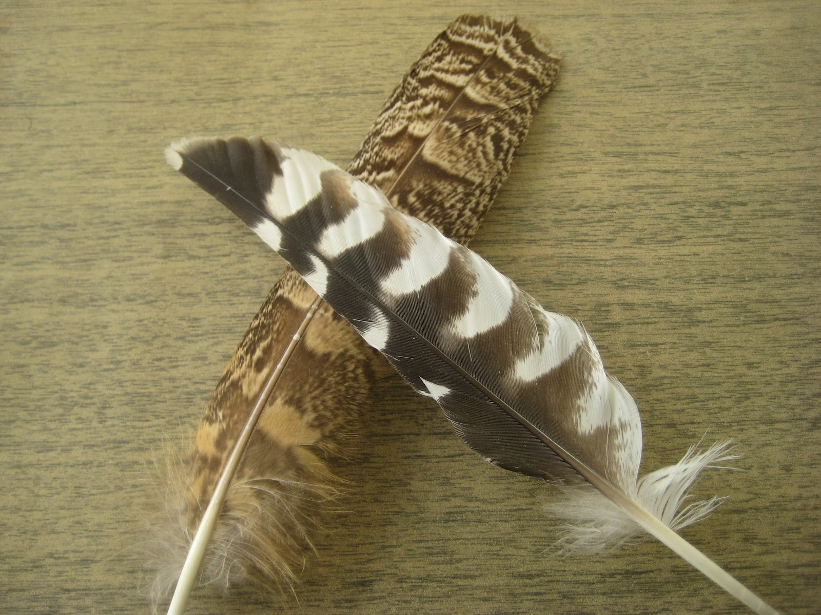 Different bird feathers - photo#4