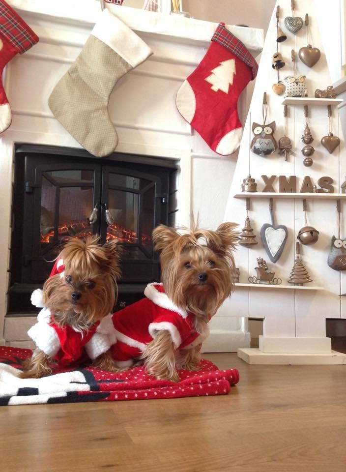 Un rbol de navidad de madera handbox craft lovers - Arbol tipico de navidad ...
