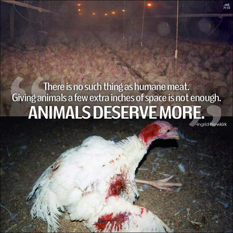 animals deserve no rights This article discusses whether non-human animals have rights, and what is   animals don't behave in a moral way they don't deserve moral treatment from.
