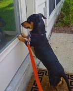 WATCHING FOR THE MAILMAN!