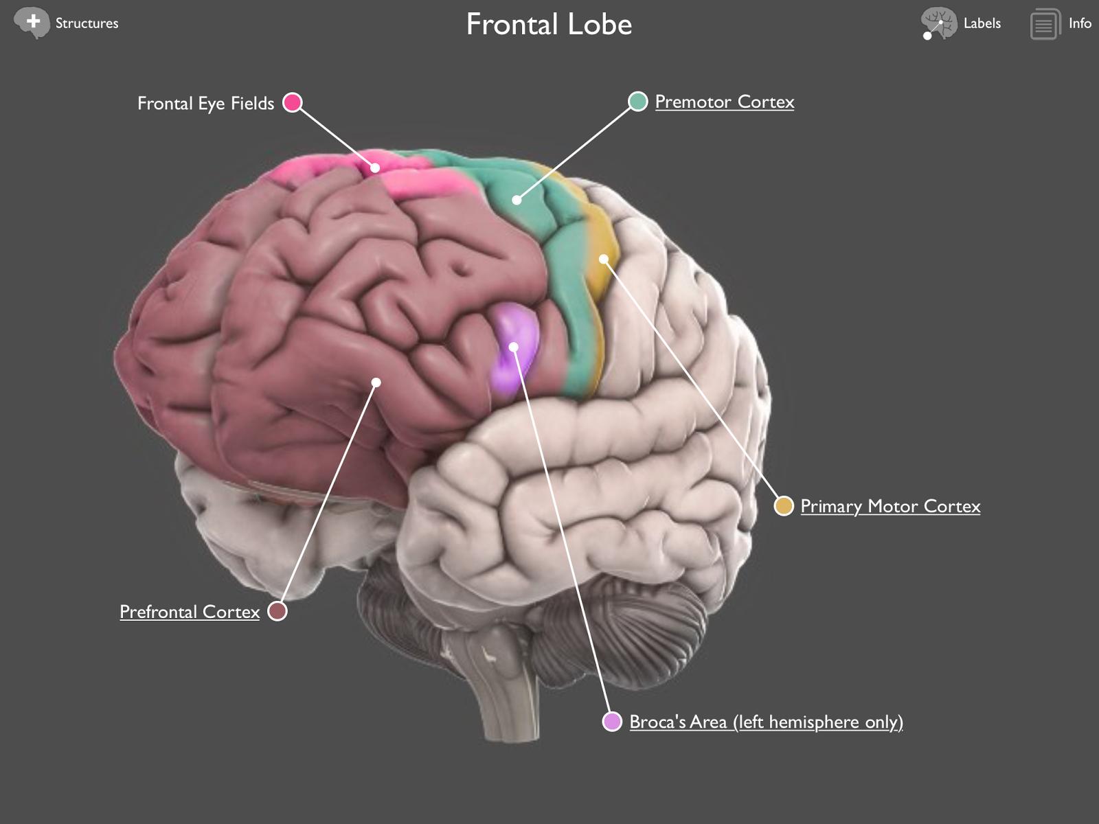 Testing Boosts Memory Brain Region Involvement Brain Posts
