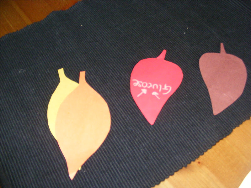Leaf Color-Changing Activity (Photo from Homeschool Escapade)