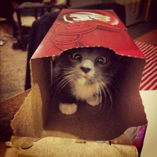 Katze in Cola Box