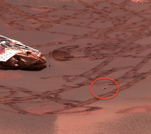 UFO SIGHTINGS DAILY: Moving Lifeform Caught by Opportunity Rover ...