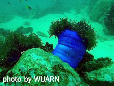 ปะการัง