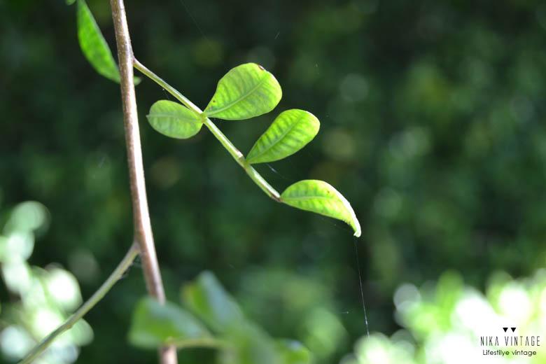 fotografia, hoy compartimos, verde, naturaleza