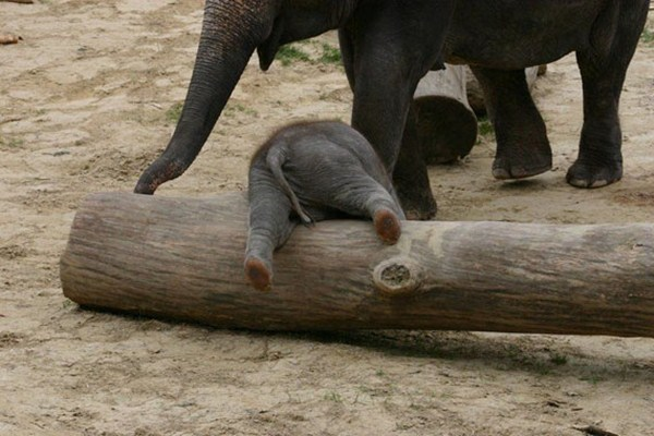 funny animals, animal pictures, cute baby elephant