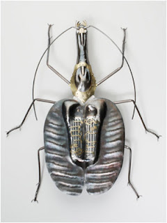 VIOLIN BEETLE by Elizabeth Goluch