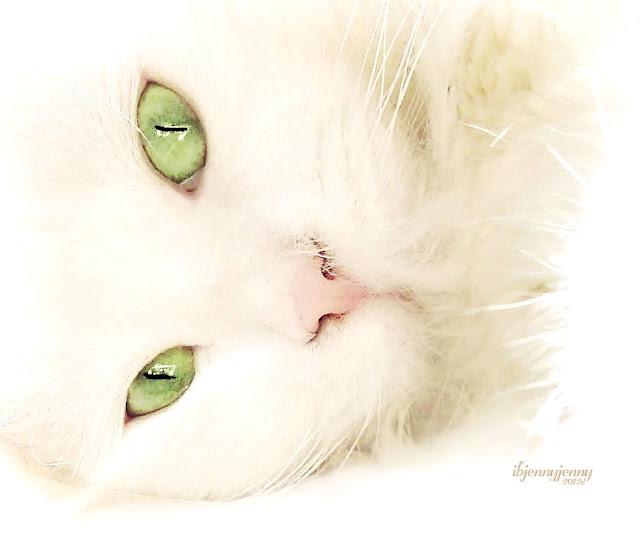 White Cat Green Eyes
