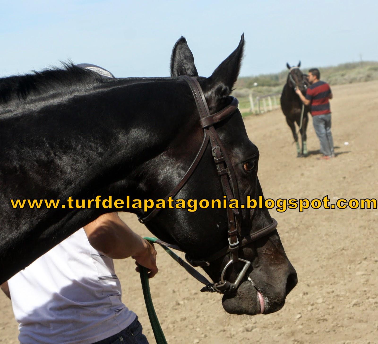 http://turfdelapatagonia.blogspot.com.ar/2014/09/video-de-villano-ganando-clasico-e.html