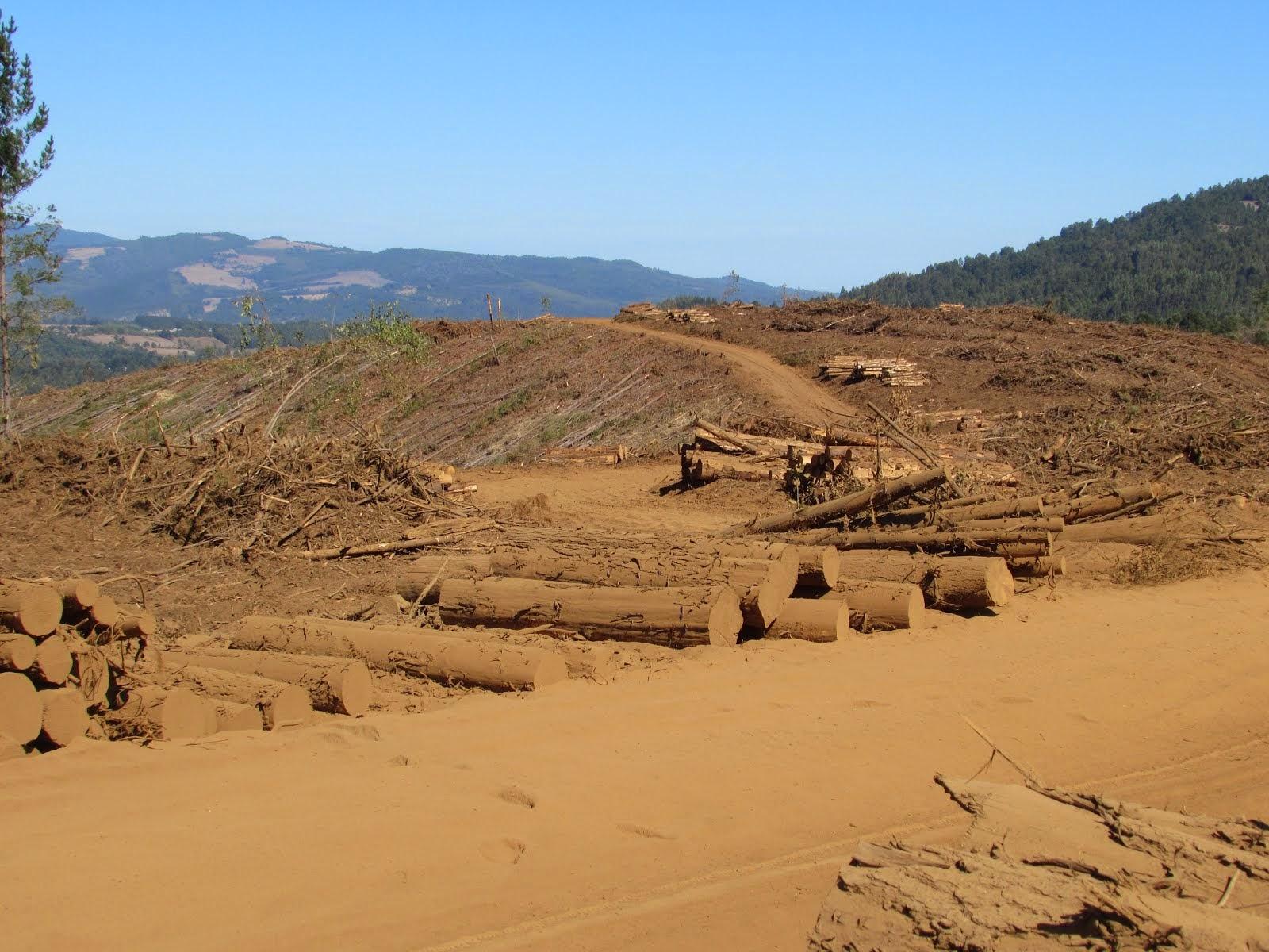 Fundo de la Forestal Arauco-Valdivia, Territorio Ancestral de la Comunidad Mapuche de Lumaco