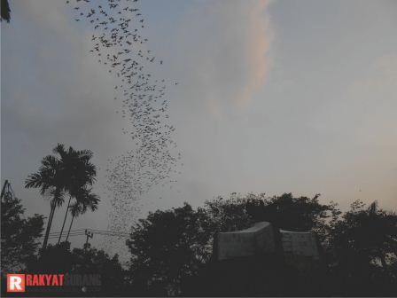Sore Tadi Langit Subang Dipenuhi Ribuan Burung