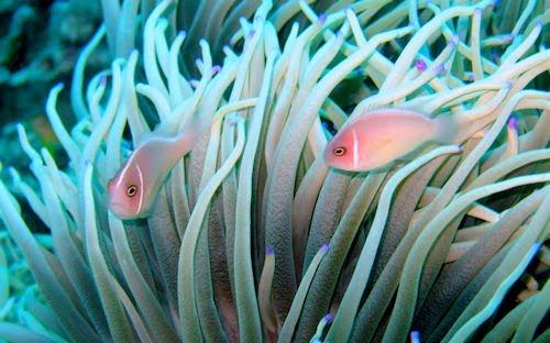 Peces, corales y arrecifes en el fondo del mar VII