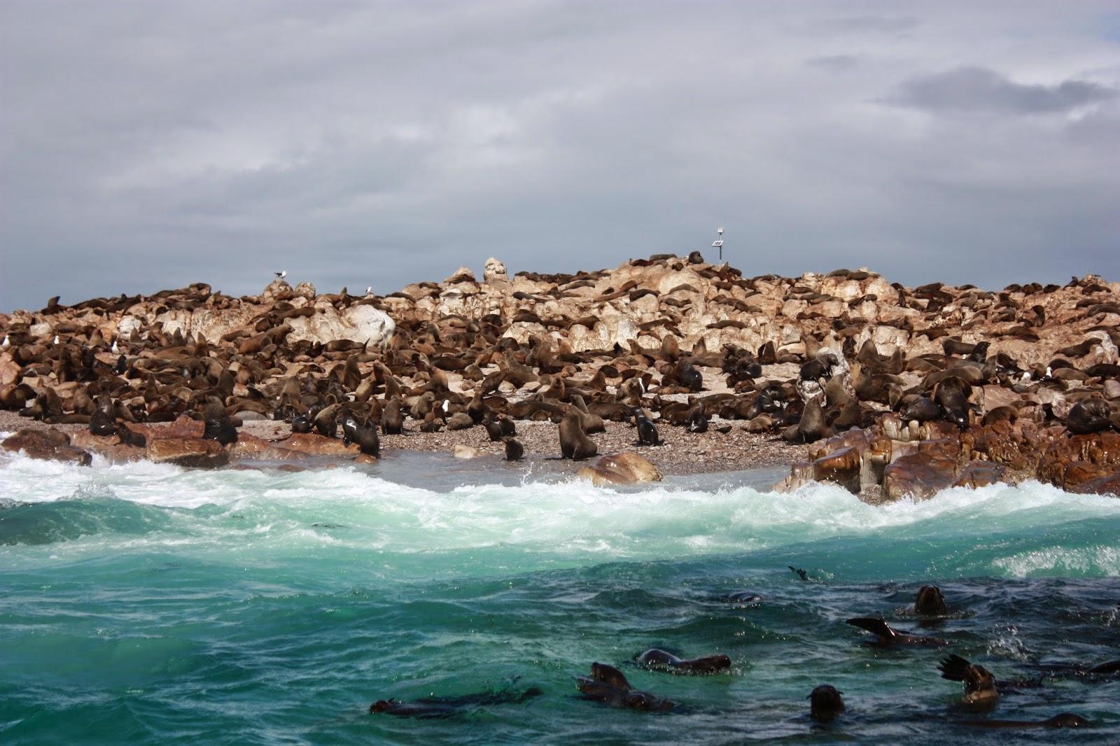 Zeehonden_op_een_eiland