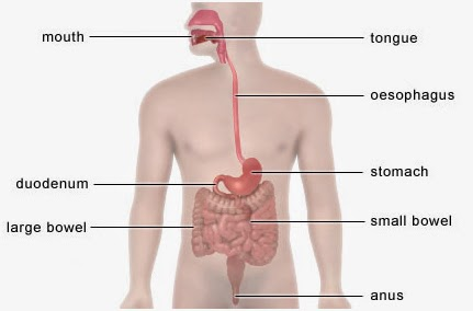 STOMACH ULCERS EXPLAINED