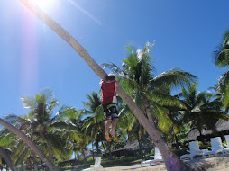 Taylor climbing the tree