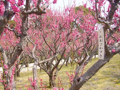 兵庫県・伊丹市 緑ヶ丘公園の梅 おおさかずき