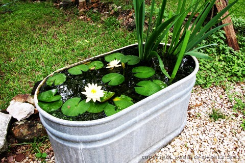 Creative small fish ponds ideas for Easy fish pond