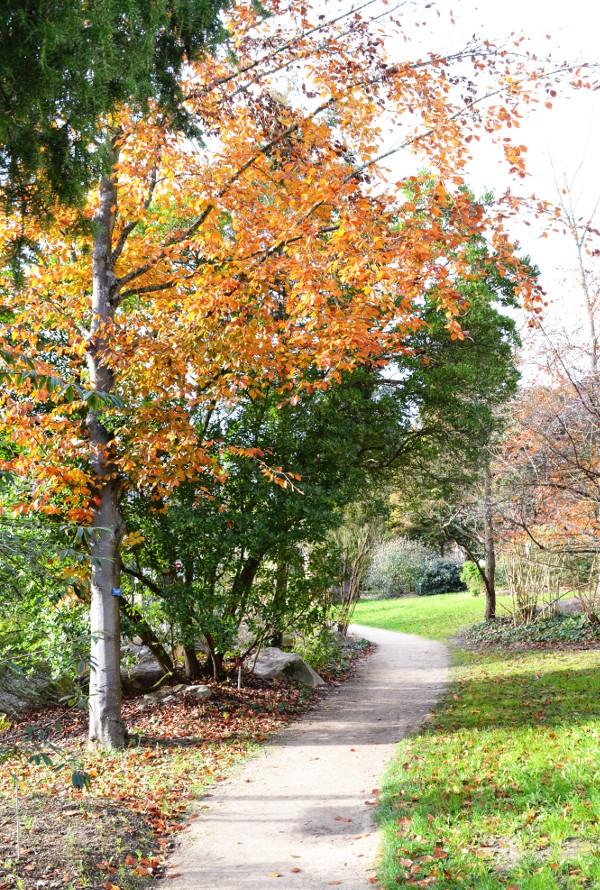 Art et glam fleurs et couleurs de d cembre au parc for Jardin botanique decembre 2015
