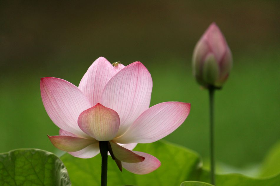 One time one meeting paradise flowers come out of 2000 year sleep these lotus flowers have an amazing history their seeds had been latent for more than 2000 years and then one of them wakened in 1951 mightylinksfo