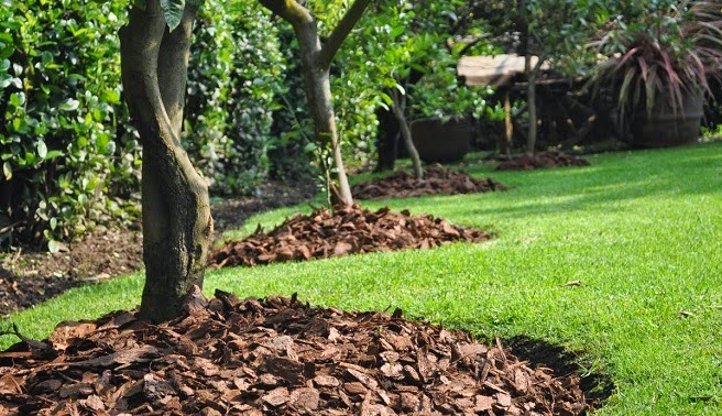 acolchado del suelo del jardn con corteza de pino