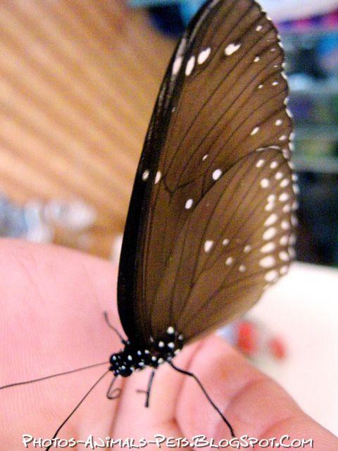 http://2.bp.blogspot.com/-V9K4u-CAz44/Tt-Vjd2_QRI/AAAAAAAACmQ/_e7vI3GhJK0/s1600/butterflies%2Bpictures.jpg