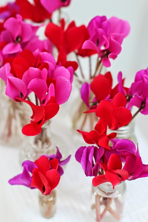Cyclamen as Cut Flowers