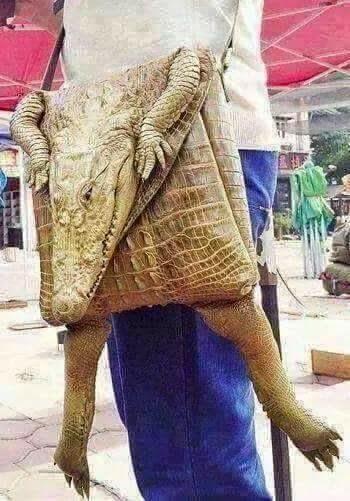 Beg Kulit Buaya Original!
