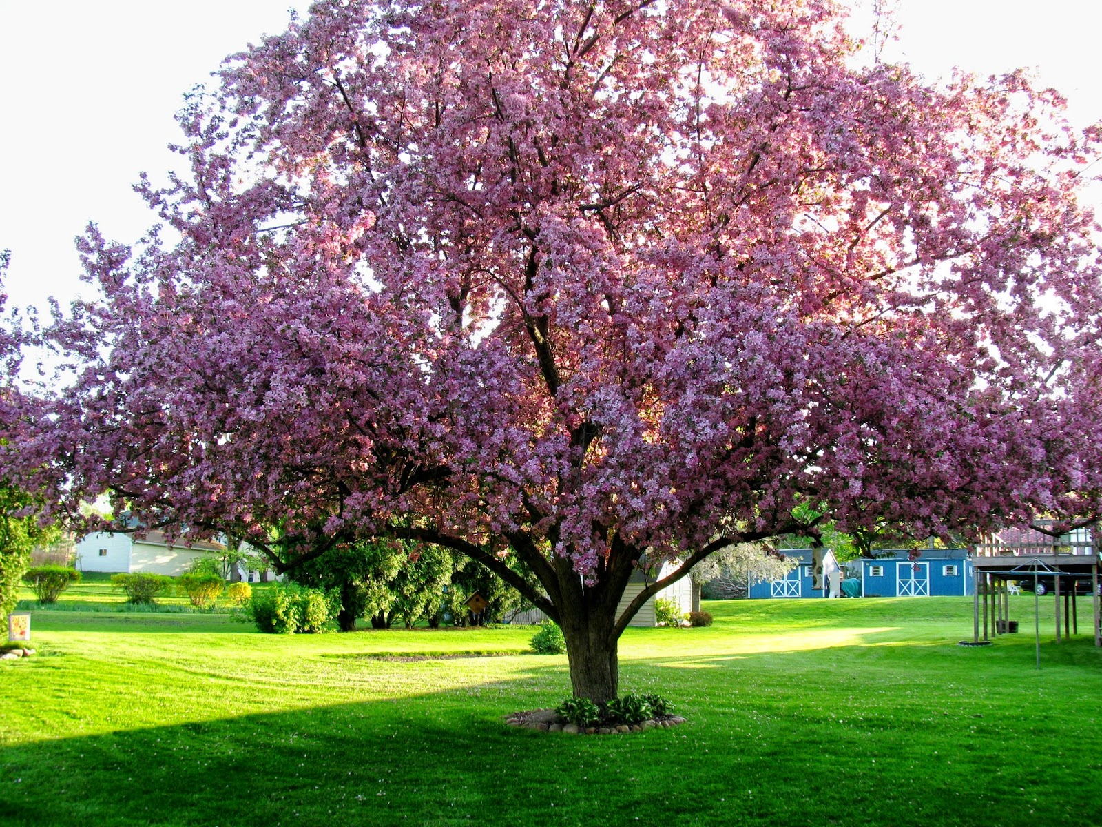 » Flowering Trees Photos