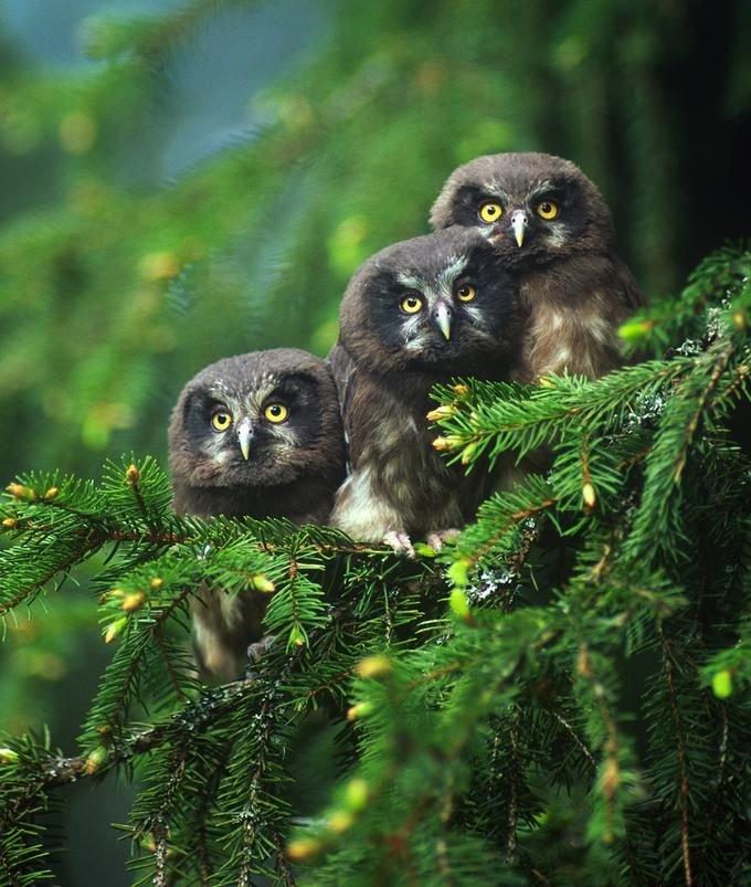 inan%25C4%25B1lmaz+hayvan+resimleri22 İnanılmaz hayvan resimleri vahşi hayat.