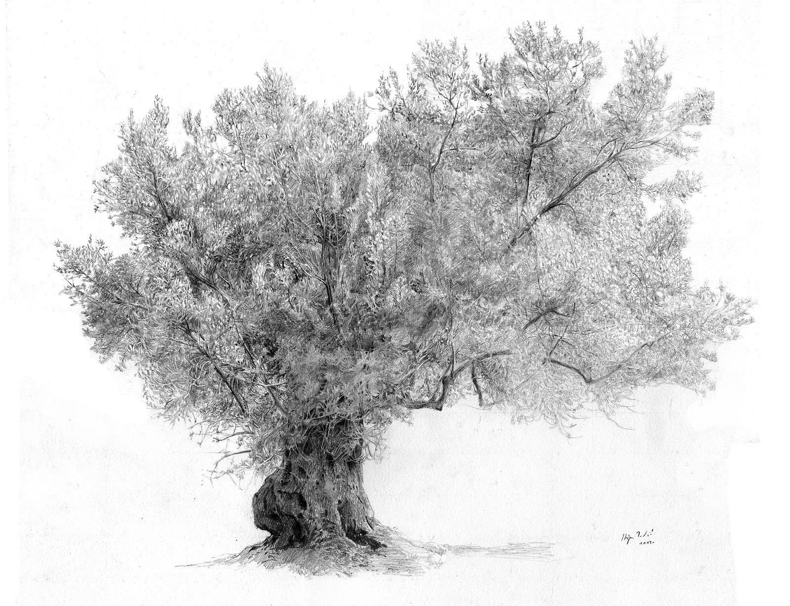 My Whole Life Olive Tree Drawing