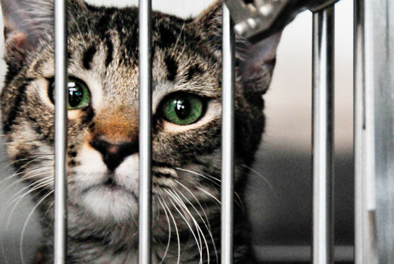 how to start a cat shelter