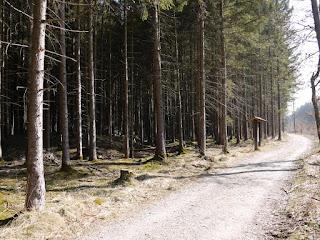Keltenschanze im Laufzorner Forst