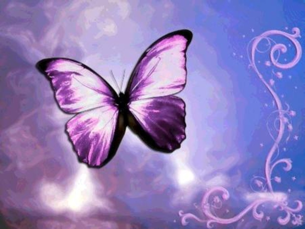 Cute Purple Butterfly Wallpaper Hd