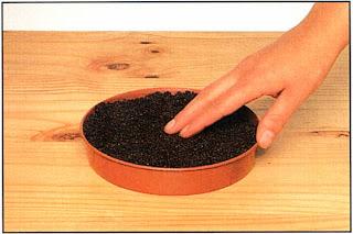 Наполните мелкий горшок или плошку торфяной почвенной смесью