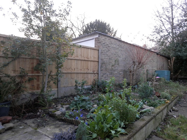 My garden, January 2016. secondhandsusie.blogspot.co.uk #gardenblogger #ukblogger #gardening