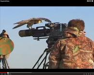 Video Halcón con minicámara